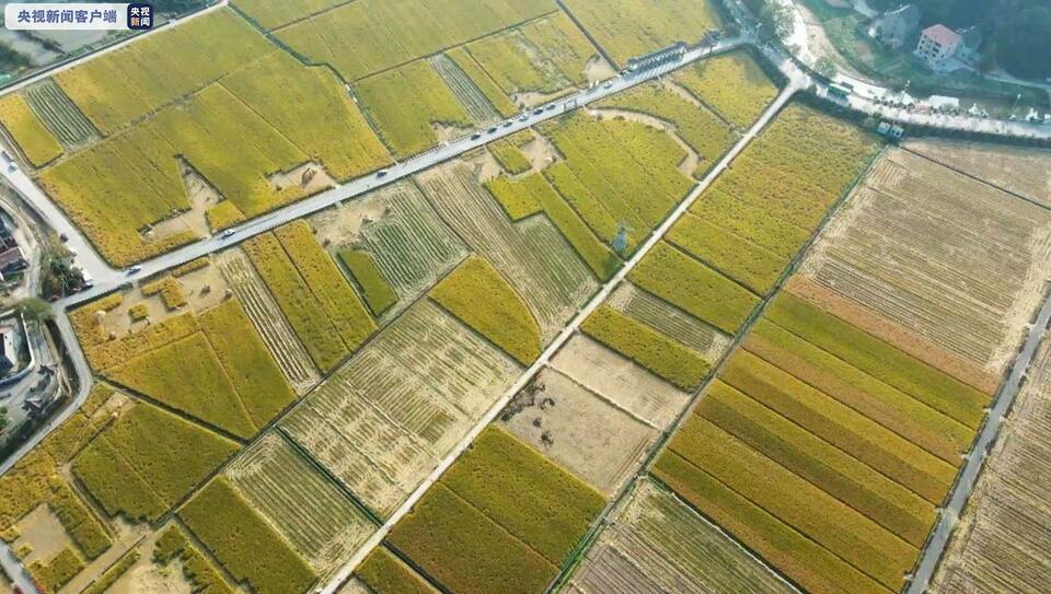 蒼翠群山 碧綠江水 這是現代版的《富春山居圖》
